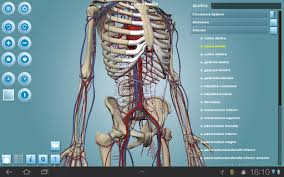 3d Human Anatomy Atlas 12 Best Anatomy Apps For Android U0026 Ios Free Apps For Android