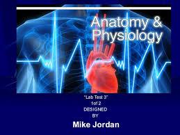 Anatomy And Physiology Lab Practical 2 Anatomy U0026 Physiology Ii Lab Test 3 1 2
