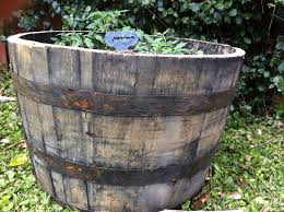 Half Barrel Planters by Gardening With Jack Daniel U0027s Deep South Magazine