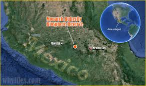 Morelia Mexico Map by Menace To Monarchs The Why Files