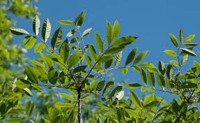Sixes Living Cherokee County Identifying Poisonous Plants