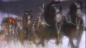 Budweiser Clydesdale Barn Meet The Budweiser Clydesdales At The Debate Barn Video Abc News
