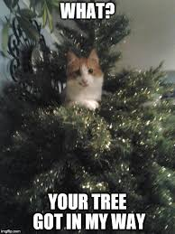 Funny Christmas Cat Memes - cats be like imgflip