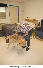 Leader Dogs For The Blind Rochester Michigan Polk Stock Photos U0026 Polk Stock Images Alamy