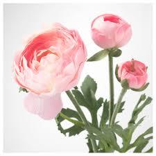 Ranunculus Smycka Artificial Flower Ranunculus Pink 52 Cm Ikea