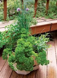 Herb Container Garden - container gardening