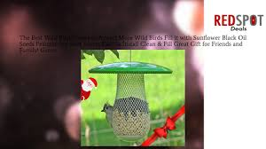 the best wild bird feeder to attract more wild birds fill it with