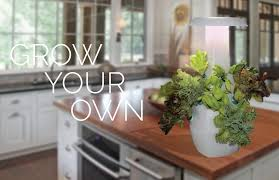 root countertop garden connects you with your food