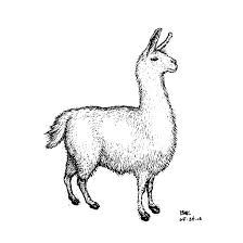 drawn llama pencil and in color drawn llama