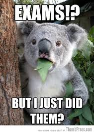 Bear Stuff Meme - best of surprised koala bear meme 25 pics