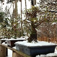 winterharte pflanzen balkon winterharte balkonpflanzen winterharte kübelpflanzen für den balkon