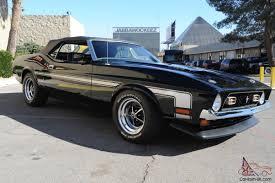 Mustang In Black Mustang