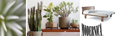 case study funnel planter with wood stand hivemodern com