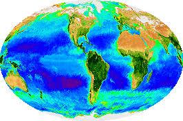 marine ecology marinebio org
