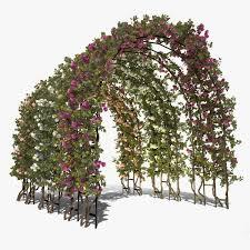 Rose Trellises Arch Roses Trellis