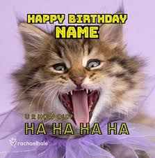 cat birthday cards funny u0026 cute funky pigeon