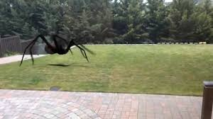 giant scary spider is in my backyard youtube