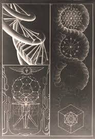 golden ratio dna spiral sacred geometry the double helix dna spiral is one of the most