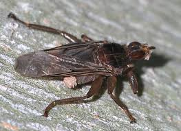 commensalism entomologists u0027 glossary amateur entomologists