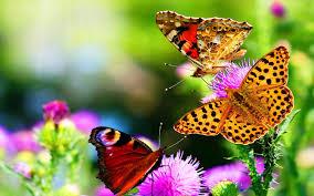 butterfly butterfiles yellow beautiful butterflies flower colors