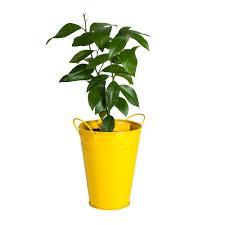 bloomsz lemon tree in decorative planter bloomsz