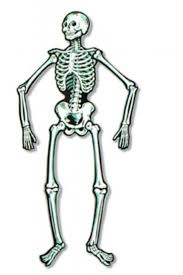 Halloween Skeleton Halloween Skeleton Decorations Designcorner