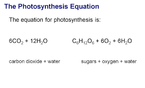 Worksheet Word Equations What Is The Chemical Equation Of Photosynthesis Jennarocca