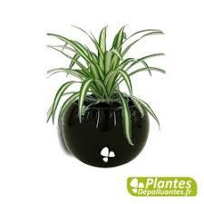 plante d駱olluante chambre plante d intérieur dépolluante chlorophytum mini cache pot