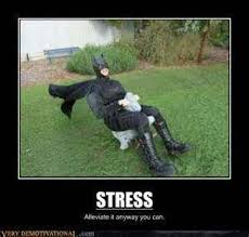 Funny Stress Memes - stress relief posters funny ordinary quotes