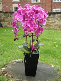 artificial potted plants 70cm large pink orchid plant in a black