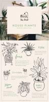 304 best indoor plants images on pinterest indoor plants plants