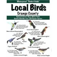 Florida Backyard Birds - southwest florida local birds