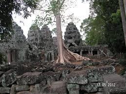 trees trounce temple ghumakkar inspiring travel experiences