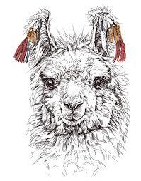 realistic sketch of lama alpaca on white stock vector image