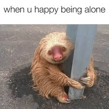 All Alone Meme - cops rescued this adorable sloth and turned him into a meme about