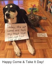Cool Cat Meme - today the ca came and took my treat not cool cat not cool at all