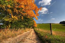 country road and autumn trees stock photo siloto 2278956