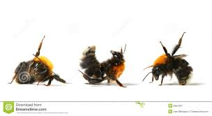 dance bumble bee royalty free stock photography image 5957307