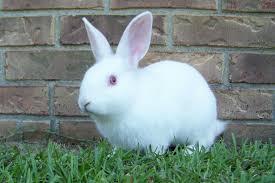 rabbits in the yard gumbo farm