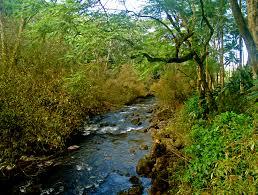 Hawaii Rivers images Laupahoehoe lovingthebigisland 39 s weblog jpg
