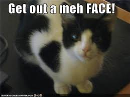 Meh Face Meme - get out a meh face i can has cheezburger funny cats cat meme