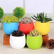 amazon com nerlmiay 5 pcs colorful small round plastic plant