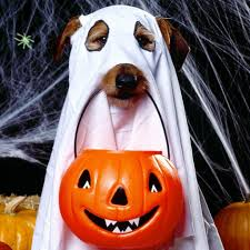halloween wallpaper for ipad download wallpaper 2048x2048 halloween holiday dog ghost jack