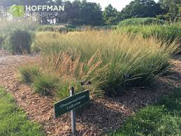 cities adventure perennial plant symposium 2016 hoffman