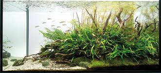 Planted Aquarium Aquascaping Aquascaping Analysis Project Ryuboku Scapefu