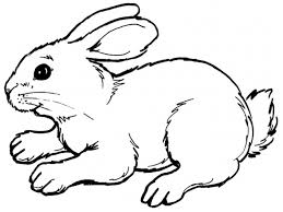 rabbit coloring sheet www bloomscenter com