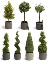 topiary trees luxury artificial topiary trees cypress buxus swirl cone outdoor