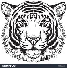 sketch of bengali tiger face drawing art ideas