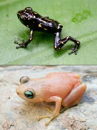 new frog found u2014has