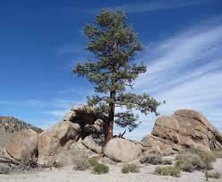 file granite mountain mono county california granitic outcrop